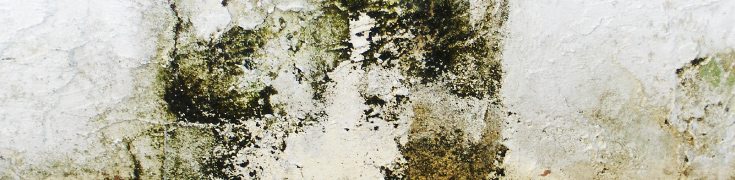 Mold and moisture on walls